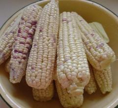 黄玉米、花玉米