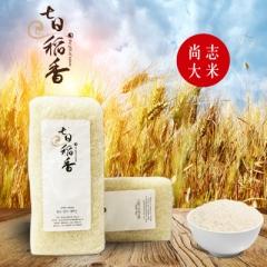 尚志大米 长粒香大米 七日稻香精选东北大米密封包装 500g米砖